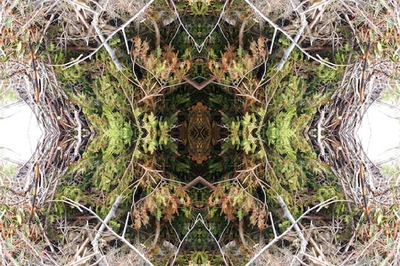 Barbara Moody — Roots 3