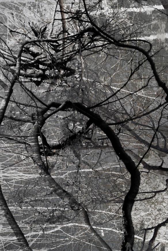 Nat Martin, Wayside Tangle #5, 18 x 24 inches, archival inkjet print, 2015.
