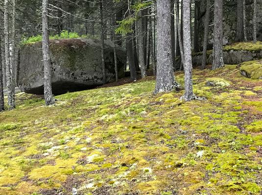 Haystack_Woods