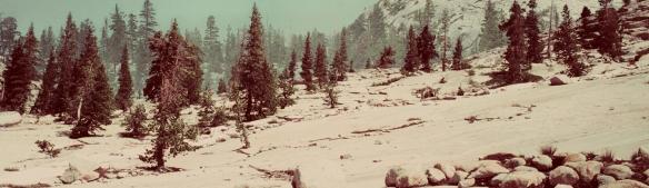 07_Martin_Nat_Yosemite 2018
