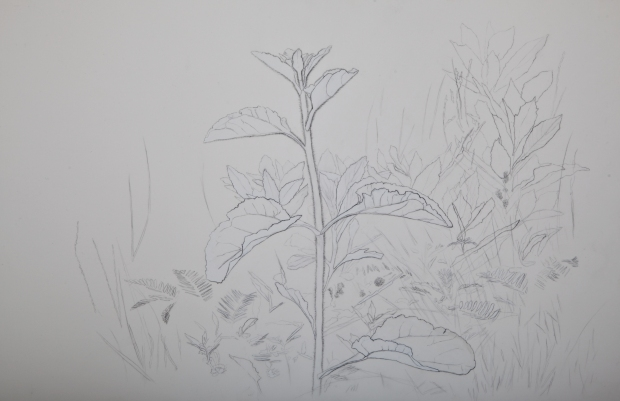 26_tolan_plant_portrait_3.jpg