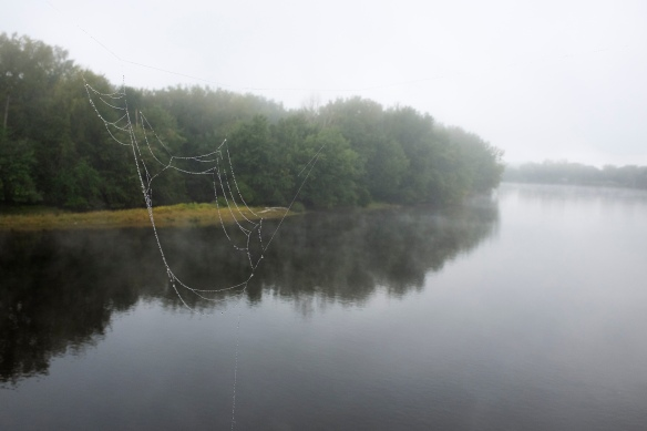 Lang_Spider web, Rail Trail between Northampton and Hadley, MA, 2018